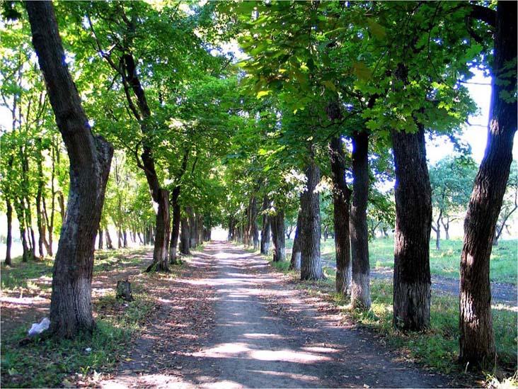Аллея Новиковского парка