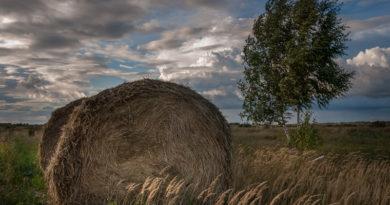 Первомайский район, фото - Е. Барабанщиков